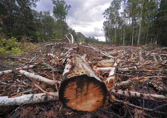 Тверской минлесхоз обязали обустроить тысячи гектаров леса