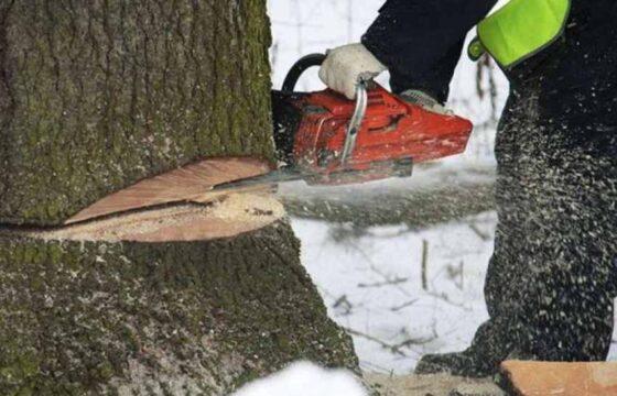 Лесного вора из Тверской области обязали пополнить федеральный бюджет