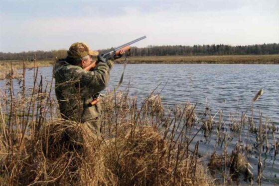В Тверской области могут перенести  весеннюю охоту