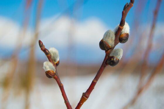 На предстоящей неделе в Тверскую область вернется весна