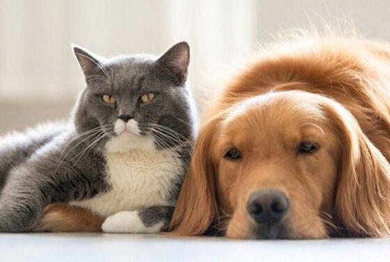 Жителям Тверской области предлагают на время взять бездомных животных