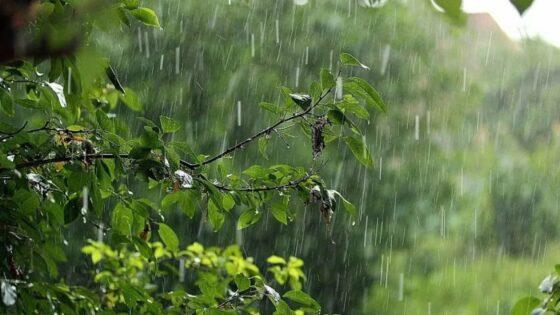 Погода в Тверской области: холод и дожди