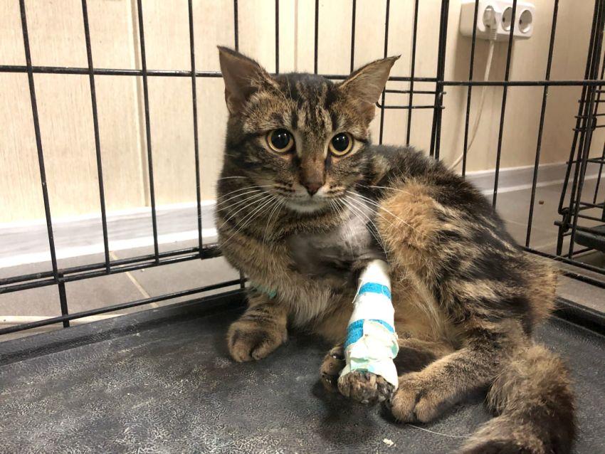 В Твери зоозащитники рассказали о самочувствии спасенного котенка Смурфика