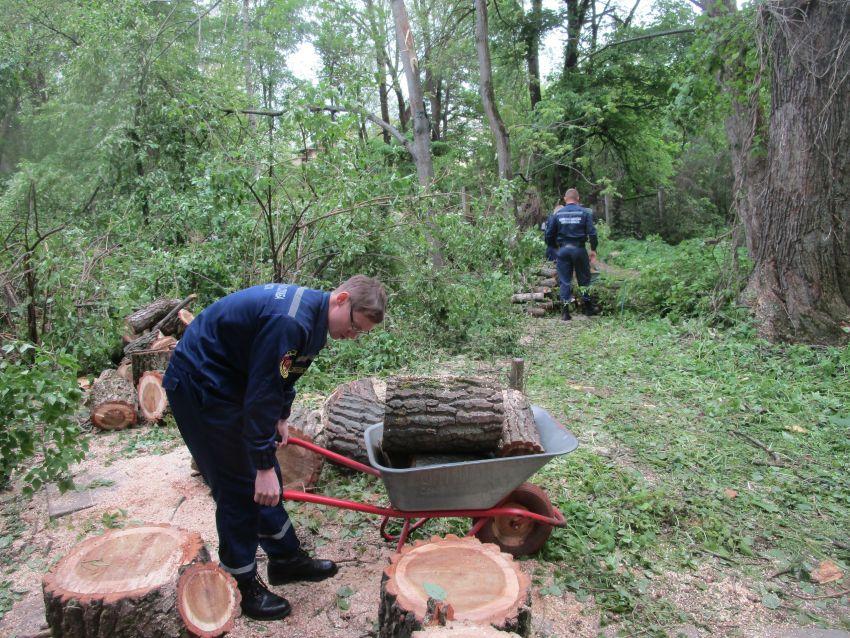 Ботанический сад ТвГУ пережил катастрофу, но открылся для посещения