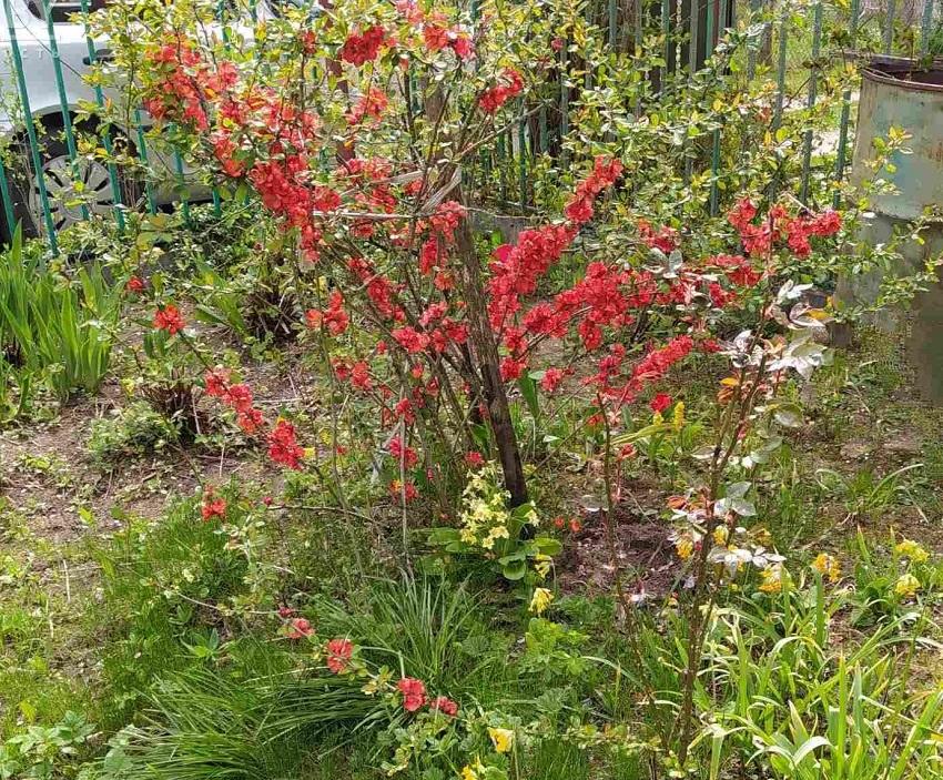 В Бежецке садовода оштрафовали за любовь к земле
