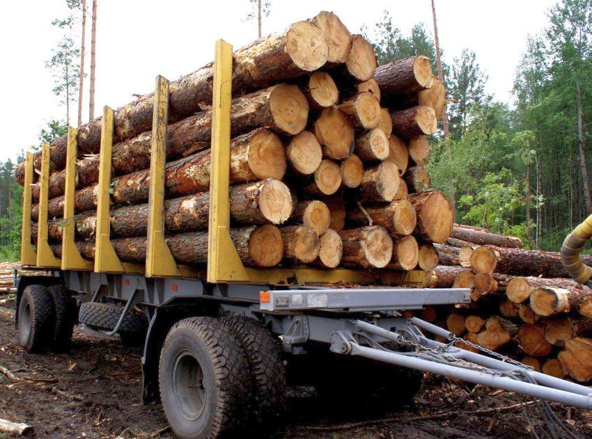 В лесах Тверской области произошел резкий всплеск хищений
