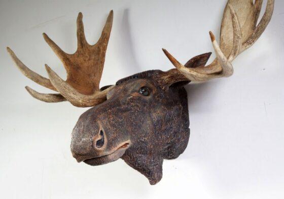 В Тверской области поймали браконьера с отрубленной головой животного