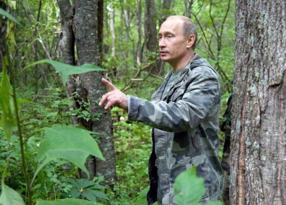 Путин поручил навести порядок в лесной отрасли
