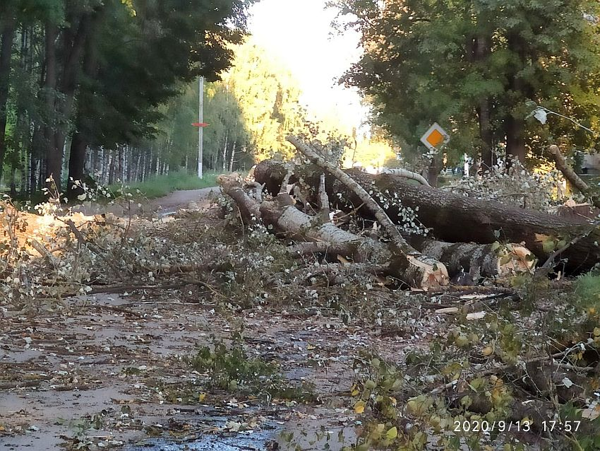 В Бежецке коммунальщики завалили дорогу деревьями