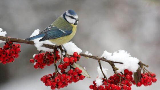 Синоптики дали прогноз на начало зимы