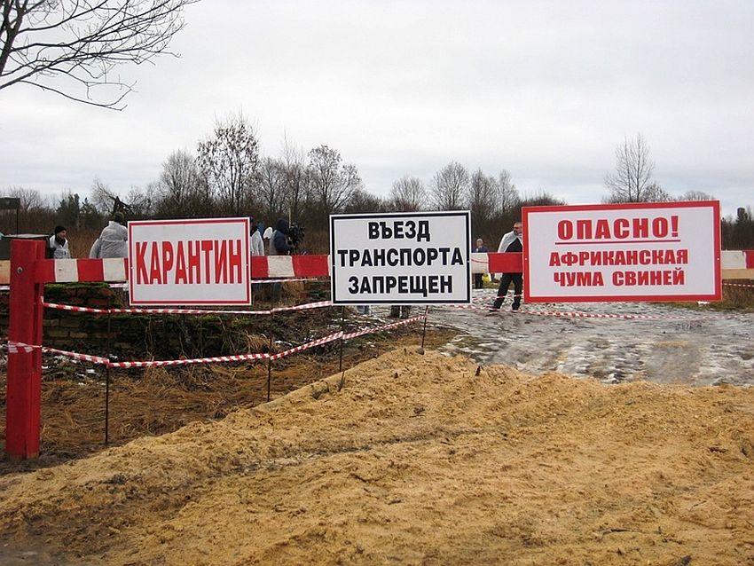 На крупном предприятии в Тверской области - вспышка африканской чумы свиней