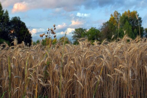 Власти Тверской области решили поддержать сев зерновых