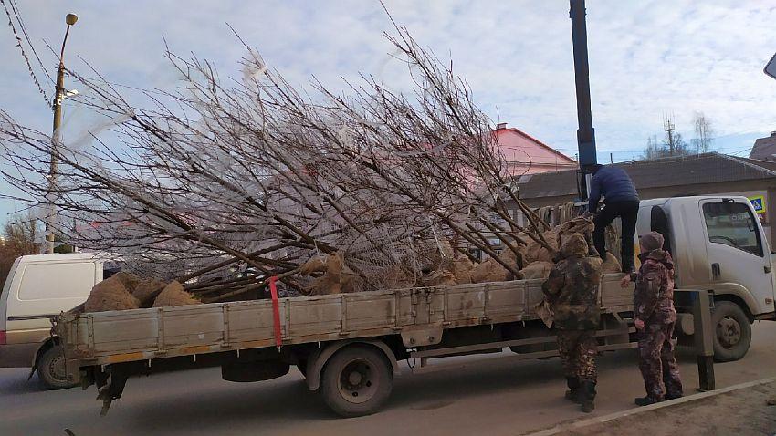 Центр Ржева украсят деревья с резными листьями