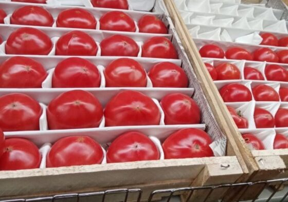 В Твери продавали помидоры и мандарины с вредителями