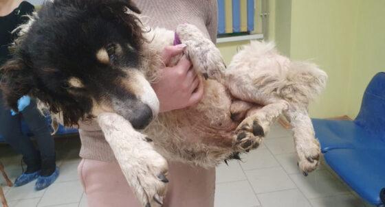 Жители Торжка спасли вмерзшего в снег пса