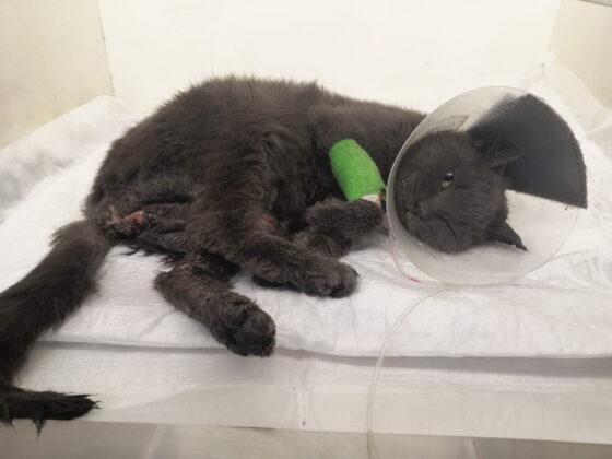 Животным, пострадавшим вместе со своей хозяйкой во время пожара в Твери, требуется помощь