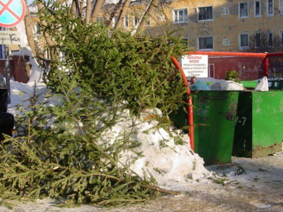 Выброшенными елками жителей Тверской области укрепят дороги