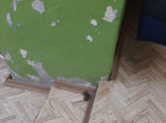 Мышь пришла в женскую консультацию в Вышнем Волочке