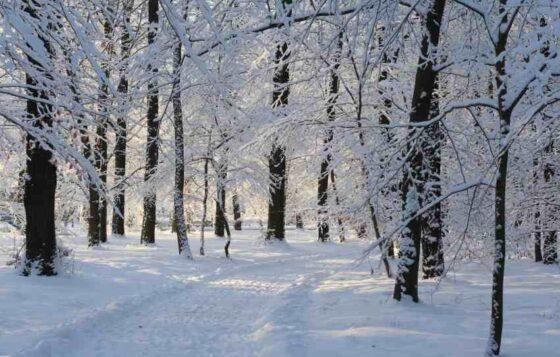 В Тверской области из-за снега закрыли парк