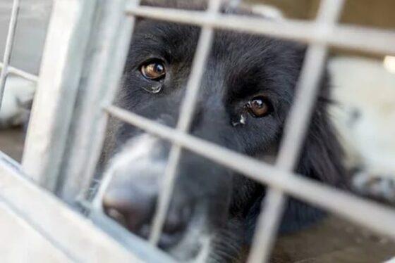 В России предлагают конфисковывать животных у жестоких владельцев