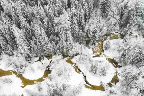 В Тверской области в заповеднике объяснили причину «грязных» рек