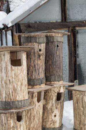 Под Тверью развесят домики для семейных сов с потомством