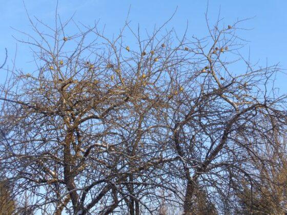 В Зубцовском районе зоологи не досчитались птицы