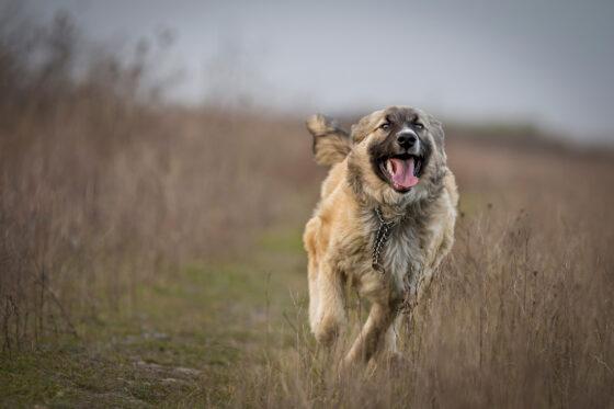 Жителям Твери предлагают сдать макулатуру, которую обменяют на крупу для собак