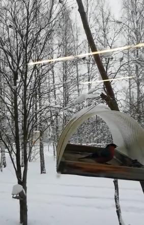 В Рамешковском районе школьники кормят птиц не выходя из класса
