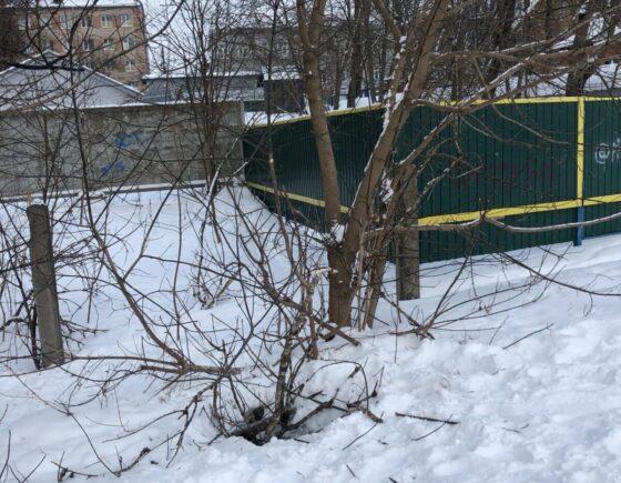 В Тверской области  семейная прогулка завершилась гибелью собаки