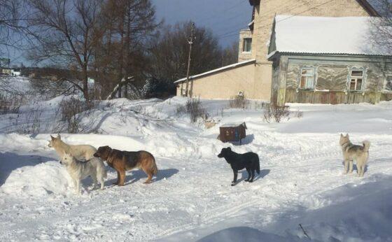 Хозяев собак, пугающих жителей деревни под Тверью, будут штрафовать