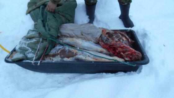 Житель Бежецка пытался вывезти из Максатихинского района мясо лося, убитого браконьером