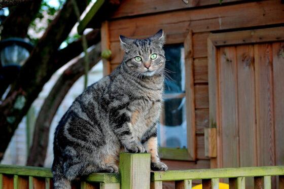 Кимры ждет нашествие кошек: в город приезжает Куклачев