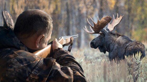 В Тверской области полицейские задержали браконьера, убившего лося