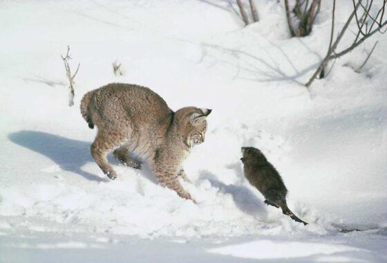 Сотрудников центра диких животных в Зубцовском районе поразили жестокие нравы охотников