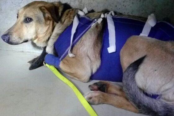 В Твери не смогли спасти собаку, отравленную догхантерами