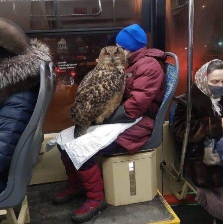 В Твери сова прокатилась на «Транспорте Верхневолжья»