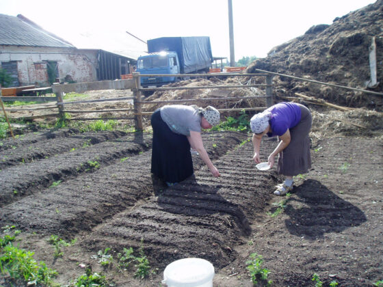 Нилова пустынь приглашает бескорыстных и трудолюбивых помощников на сельхозработы