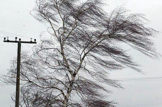 Жителей Тверской области предупредили о сильном ветре