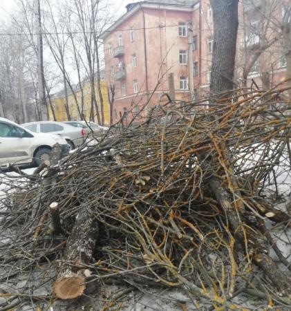 В Твери двор многоэтажки завалили сухими деревьями