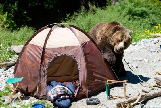 Начало конца: дикие туристы не знают, как теперь отдыхать в Тверской области