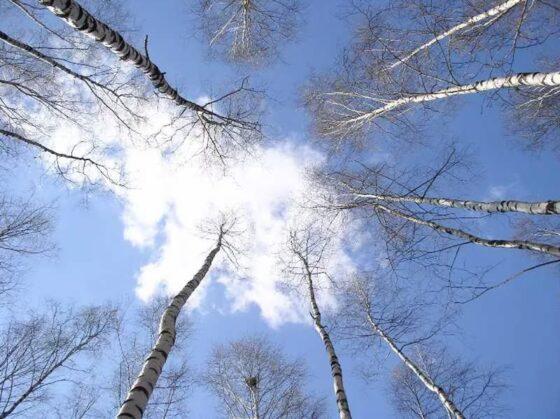 Погода меняется - на выходных в Тверской области разогреет