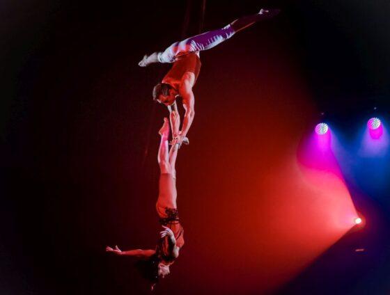 Страсти под куполом: жители и гости Твери могут увидеть уникальный цирковой номер
