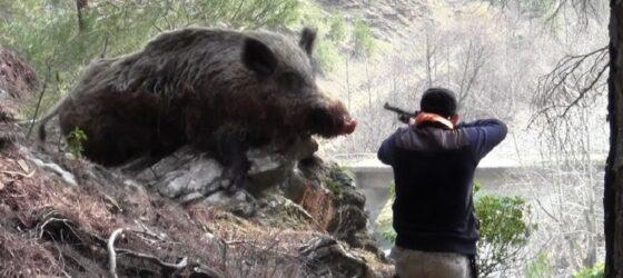 В Тверской области задержали браконьера, наехавшего на кабана