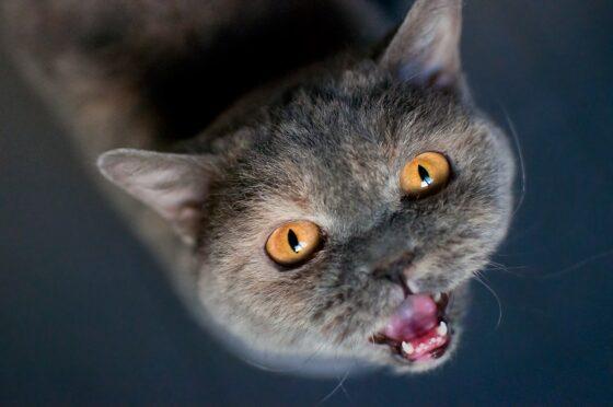 В Старицком районе кошки из-за смерти хозяина приюта едят пластик