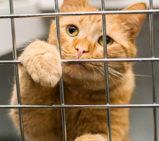 На выставке в Твери грязных уличных котов выдавали за породистых