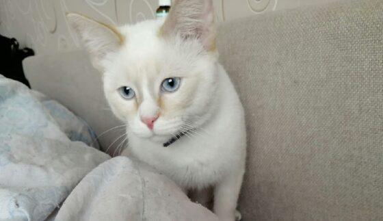 Тверичанка ищет кота Симбу, потерянного во время переезда в другой город