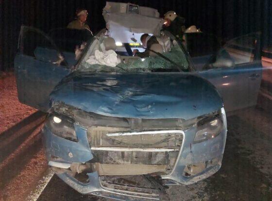 В Тверской области водитель наехал на лося и сам пострадал