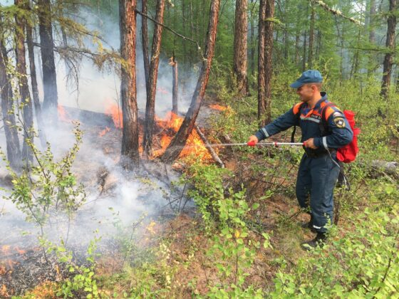 В Тверской области  стали меньше гореть леса