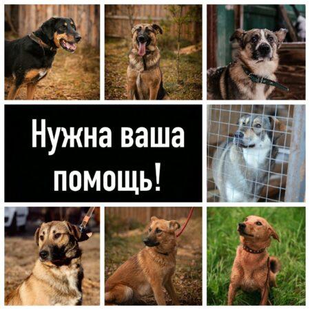 Тверская зоозащитница  выходит на пенсию и не может содержать семерых собак